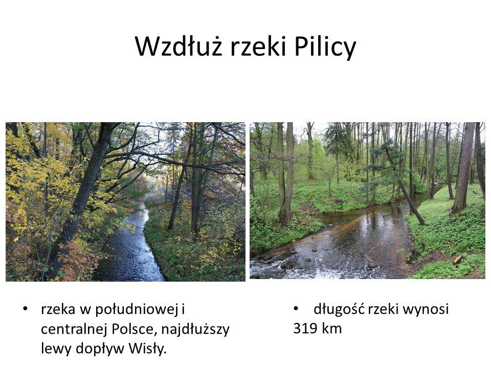 Wzdłuż rzeki Pilicy rzeka w południowej i centralnej Polsce, najdłuższy lewy dopływ Wisły. długość rzeki wynosi 319 km