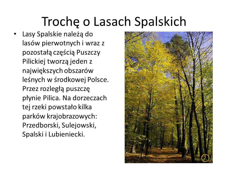 Trochę o Lasach Spalskich Lasy Spalskie należą do lasów pierwotnych i wraz z pozostałą częścią Puszczy Pilickiej tworzą jeden z największych obszarów