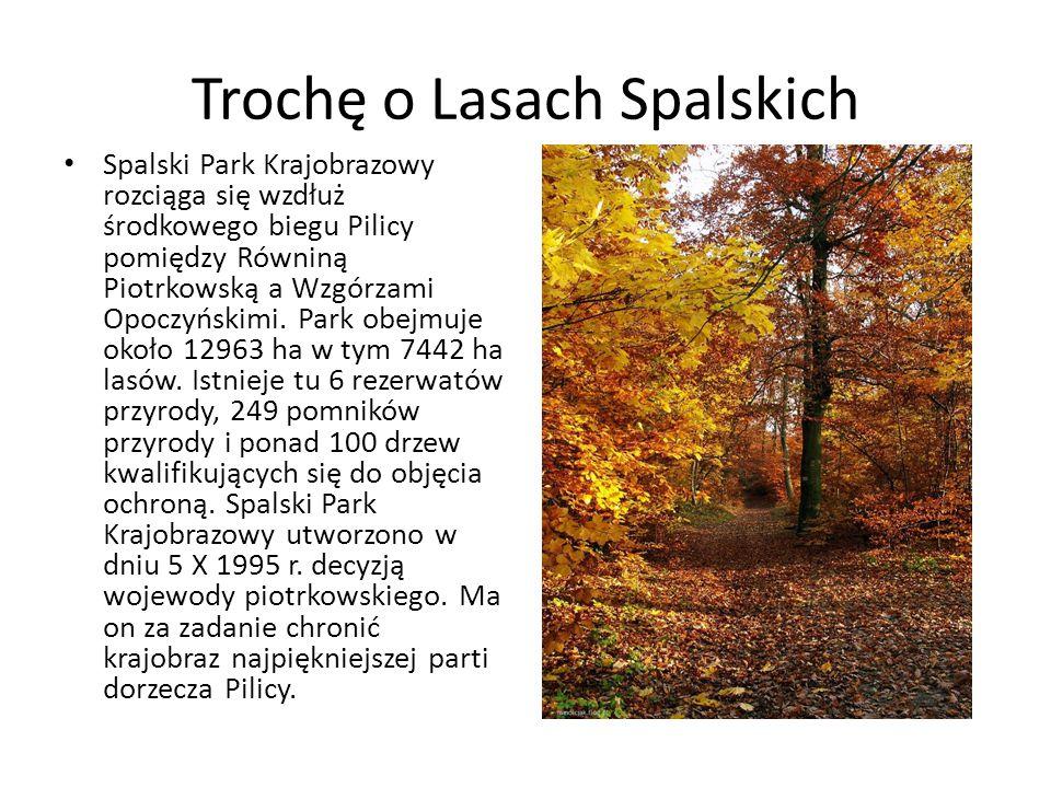 Trochę o Lasach Spalskich Spalski Park Krajobrazowy rozciąga się wzdłuż środkowego biegu Pilicy pomiędzy Równiną Piotrkowską a Wzgórzami Opoczyńskimi.