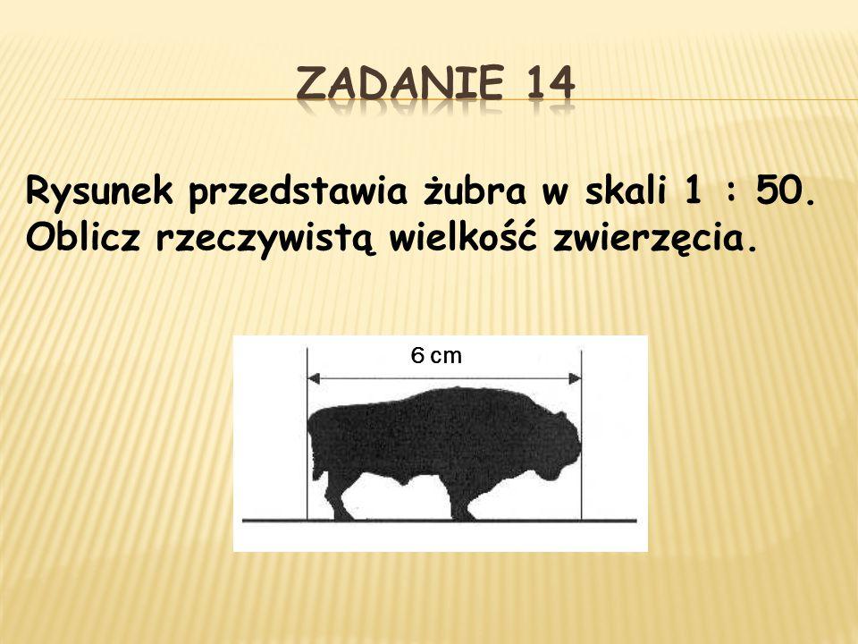 Rysunek przedstawia żubra w skali 1 : 50. Oblicz rzeczywistą wielkość zwierzęcia. 6 cm