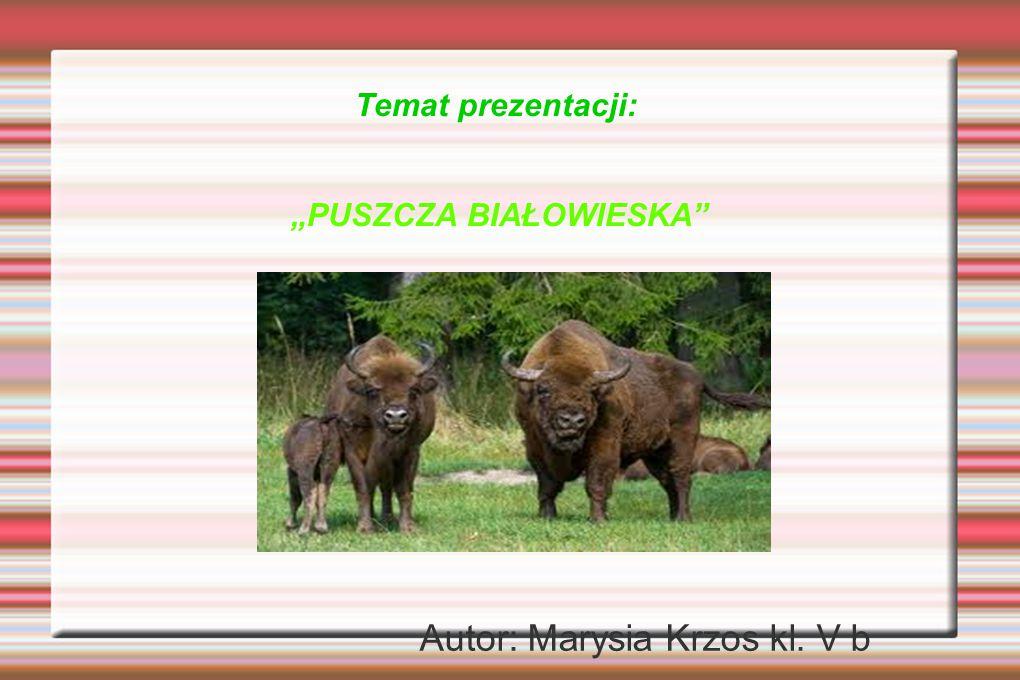 """Temat prezentacji: """"PUSZCZA BIAŁOWIESKA"""" Autor: Marysia Krzos kl. V b"""