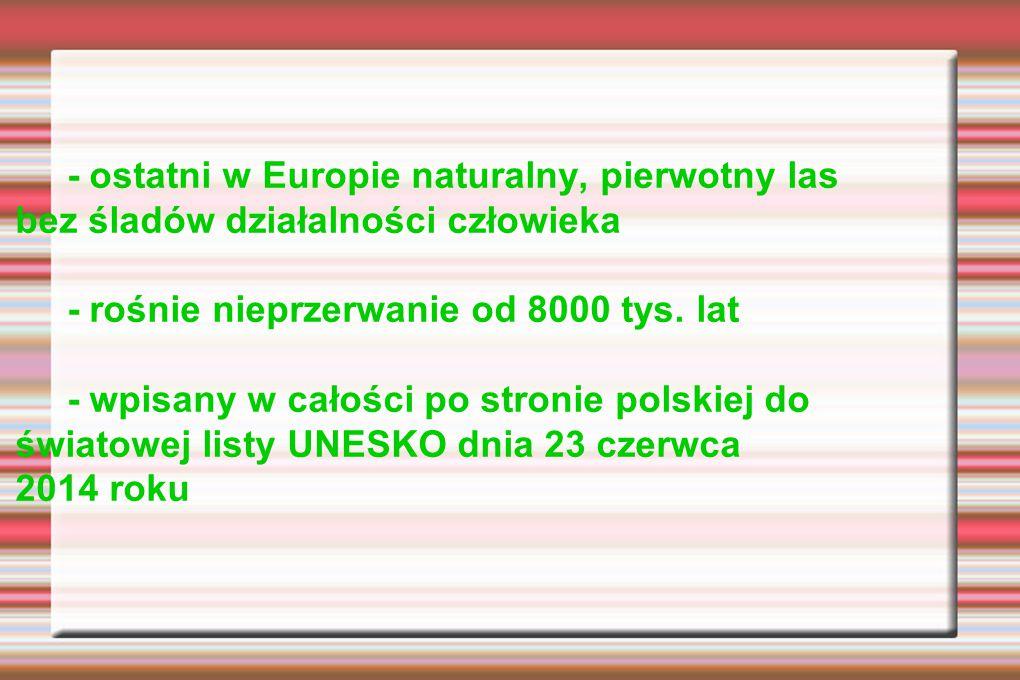 Historia powstania Białowieskiego Parku Narodowego: 1921 r.