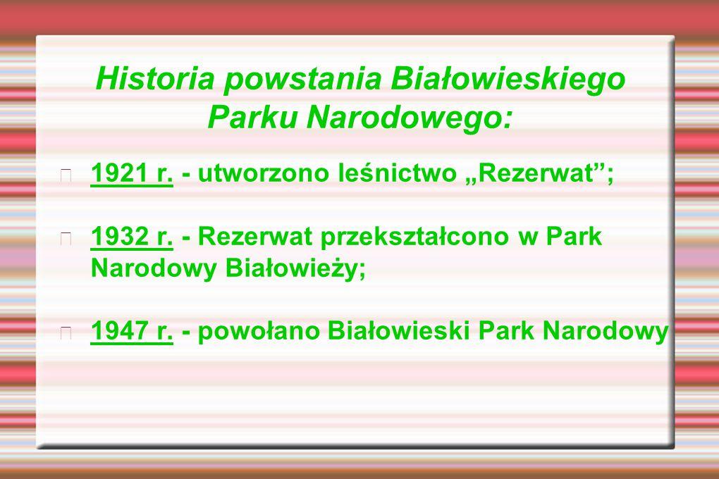 """Historia powstania Białowieskiego Parku Narodowego: 1921 r. - utworzono leśnictwo """"Rezerwat""""; 1932 r. - Rezerwat przekształcono w Park Narodowy Białow"""