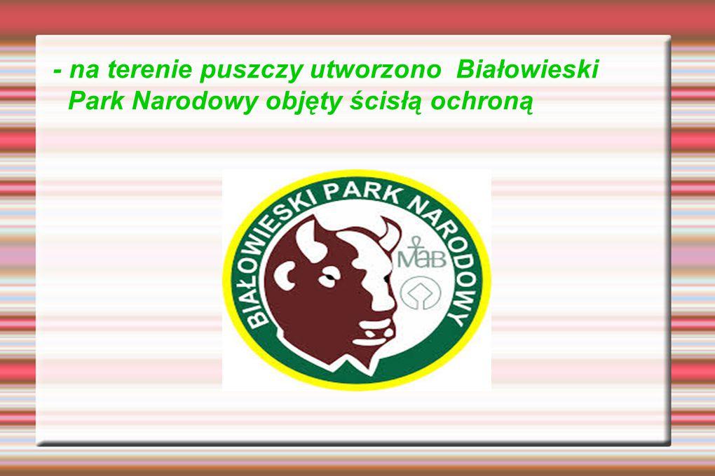 Puszcza leży na terenie Niziny Północnopodlaskiej przy granicy z Białorusią. Puszcza Białowieska