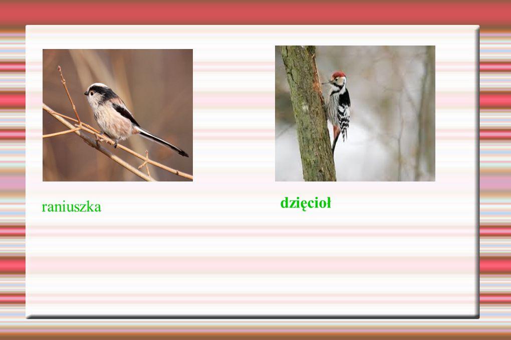 """Dziękuję za uwagę ;-) Źródło: Treść – podręcznik """"Przyroda z klasą kl."""