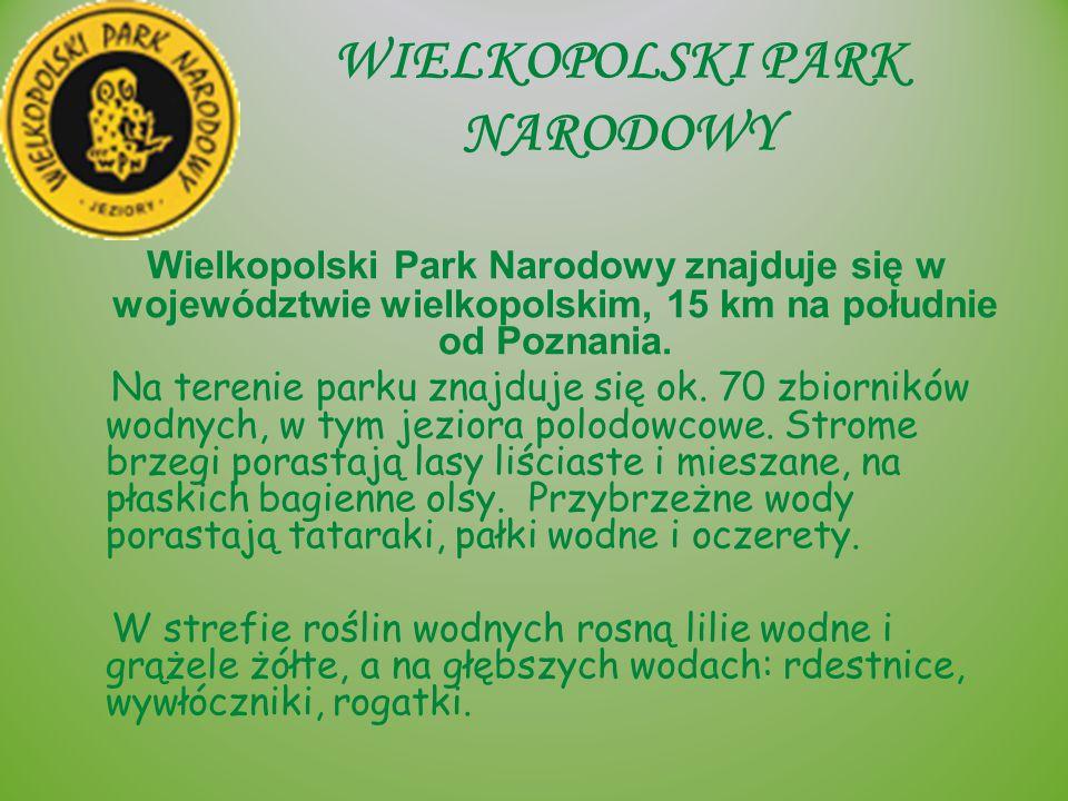 WIELKOPOLSKI PARK NARODOWY Wielkopolski Park Narodowy znajduje się w województwie wielkopolskim, 15 km na południe od Poznania. Na terenie parku znajd