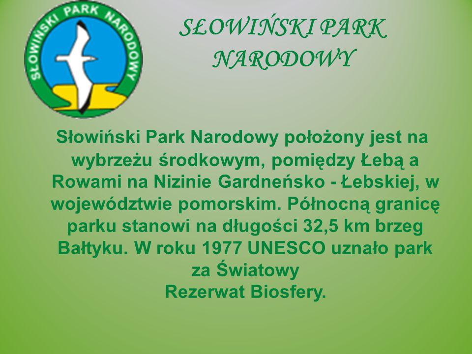 SŁOWIŃSKI PARK NARODOWY Słowiński Park Narodowy położony jest na wybrzeżu środkowym, pomiędzy Łebą a Rowami na Nizinie Gardneńsko - Łebskiej, w wojewó