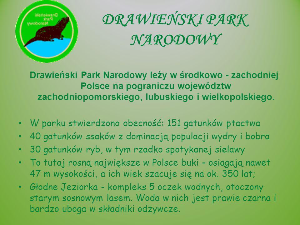 DRAWIEŃSKI PARK NARODOWY Drawieński Park Narodowy leży w środkowo - zachodniej Polsce na pograniczu województw zachodniopomorskiego, lubuskiego i wiel