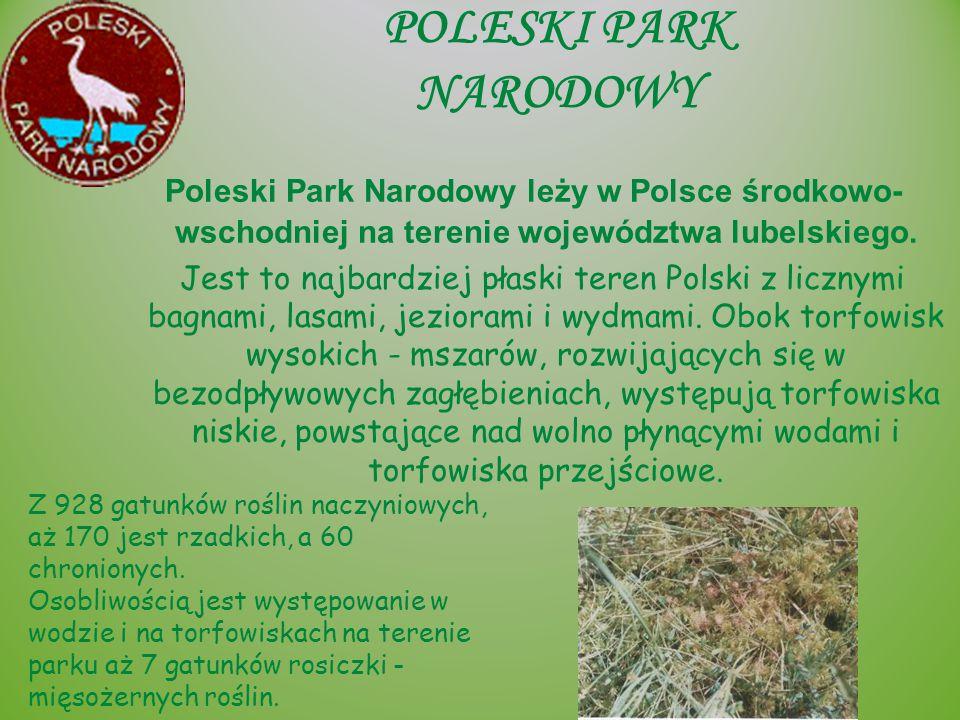 POLESKI PARK NARODOWY Poleski Park Narodowy leży w Polsce środkowo- wschodniej na terenie województwa lubelskiego. Jest to najbardziej płaski teren Po