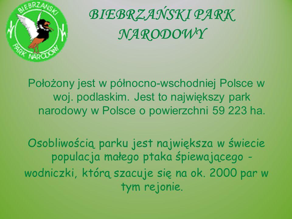 BIEBRZAŃSKI PARK NARODOWY Położony jest w północno-wschodniej Polsce w woj. podlaskim. Jest to największy park narodowy w Polsce o powierzchni 59 223