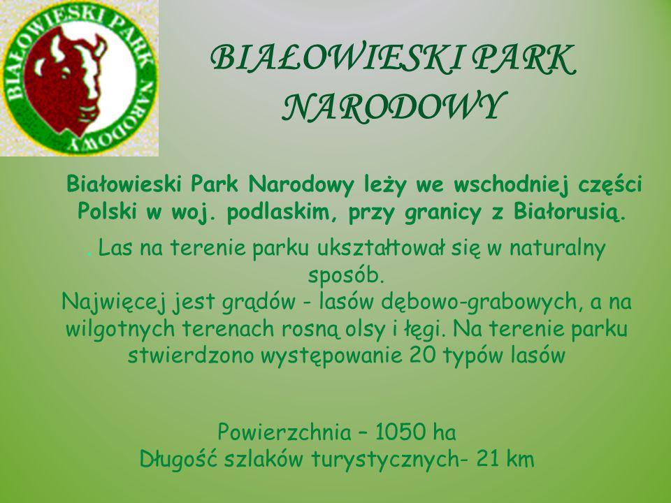 BIAŁOWIESKI PARK NARODOWY Białowieski Park Narodowy leży we wschodniej części Polski w woj. podlaskim, przy granicy z Białorusią. Powierzchnia – 1050
