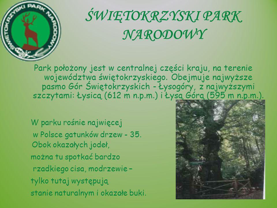 BABIOGÓRSKI PARK NARODOWY Babiogórski Park Narodowy znajduje się w południowej części kraju w województwie małopolskim, przy granicy Polski ze Słowacją.