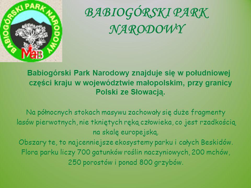 TATRZAŃSKI PARK NARODOWY Tatrzański Park Narodowy leży w południowej części Polski w woj.