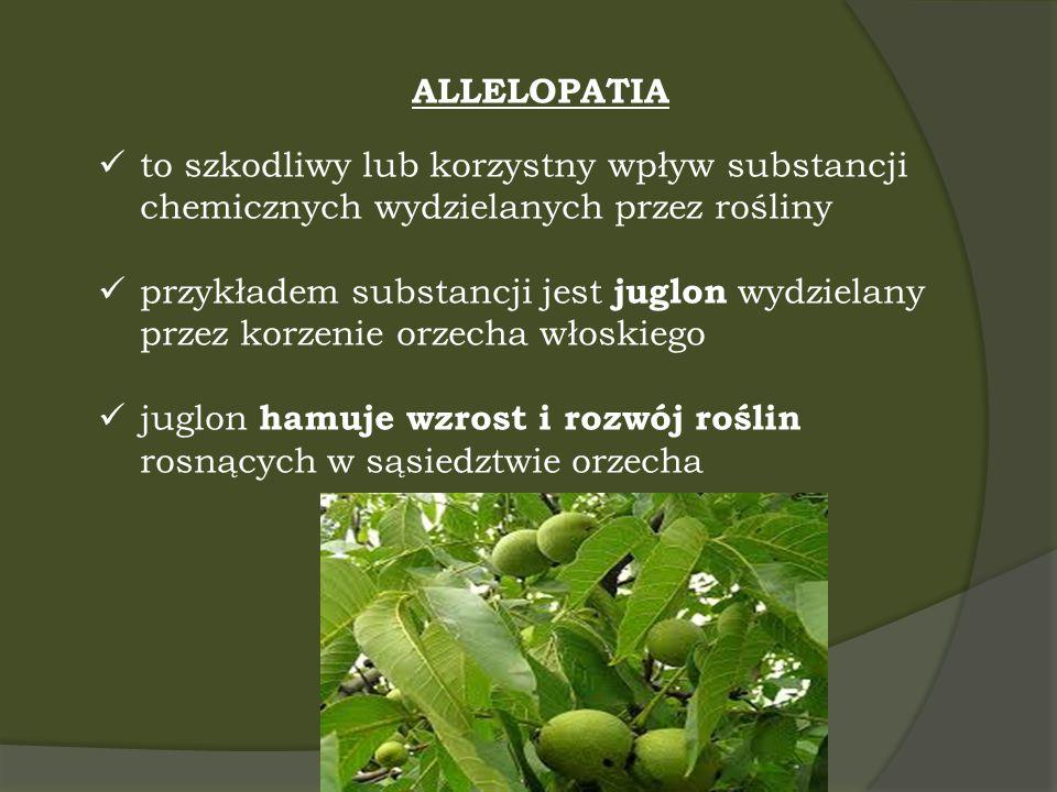 ALLELOPATIA to szkodliwy lub korzystny wpływ substancji chemicznych wydzielanych przez rośliny przykładem substancji jest juglon wydzielany przez korz