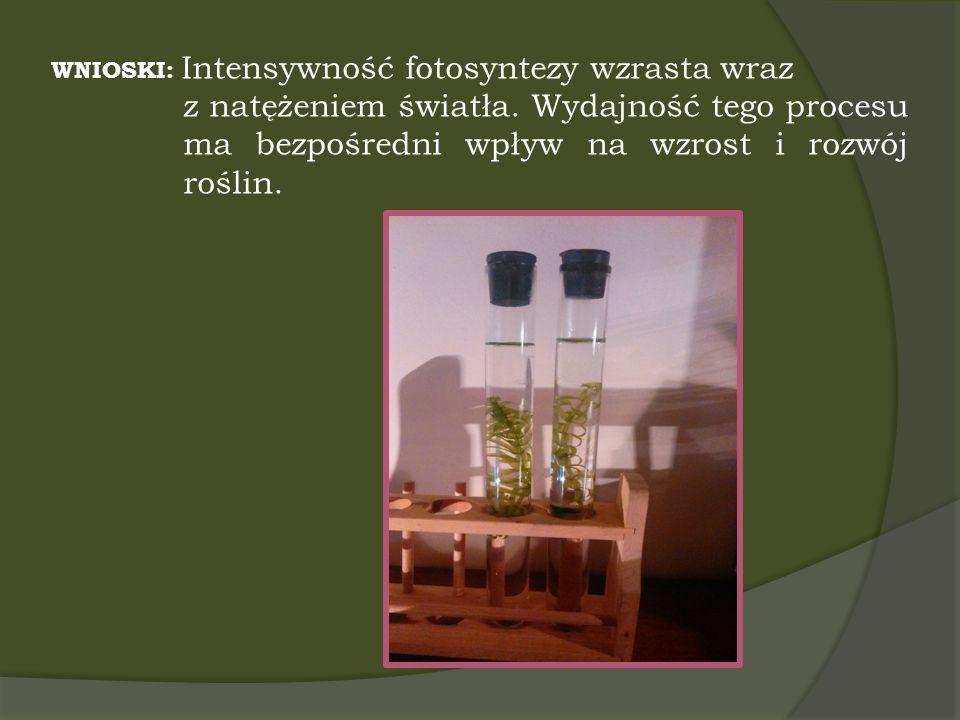 WNIOSKI: Intensywność fotosyntezy wzrasta wraz z natężeniem światła. Wydajność tego procesu ma bezpośredni wpływ na wzrost i rozwój roślin.