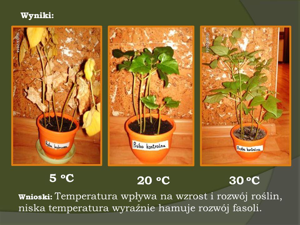 Wyniki: 20 o C 5 o C 30 o C Wnioski: Temperatura wpływa na wzrost i rozwój roślin, niska temperatura wyraźnie hamuje rozwój fasoli.