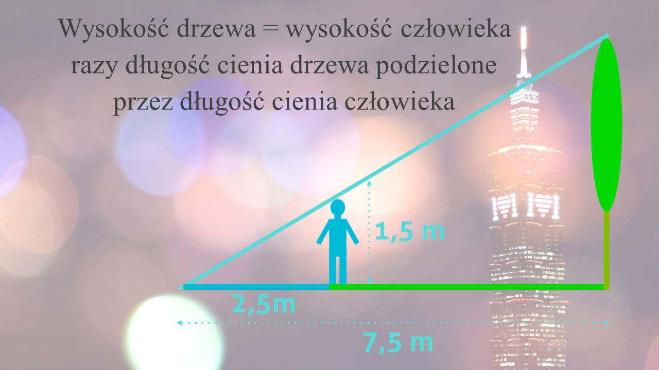 Wysokość drzewa = wysokość człowieka razy długość cienia drzewa podzielone przez długość cienia człowieka