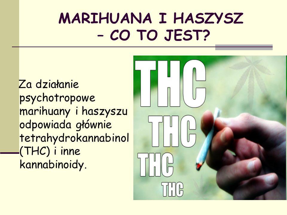 MARIHUANA I HASZYSZ – CO TO JEST? Za działanie psychotropowe marihuany i haszyszu odpowiada głównie tetrahydrokannabinol (THC) i inne kannabinoidy.