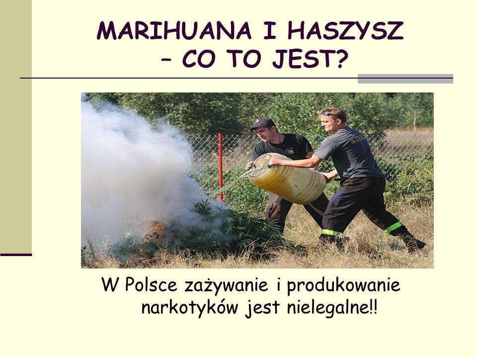 W Polsce zażywanie i produkowanie narkotyków jest nielegalne!! MARIHUANA I HASZYSZ – CO TO JEST?