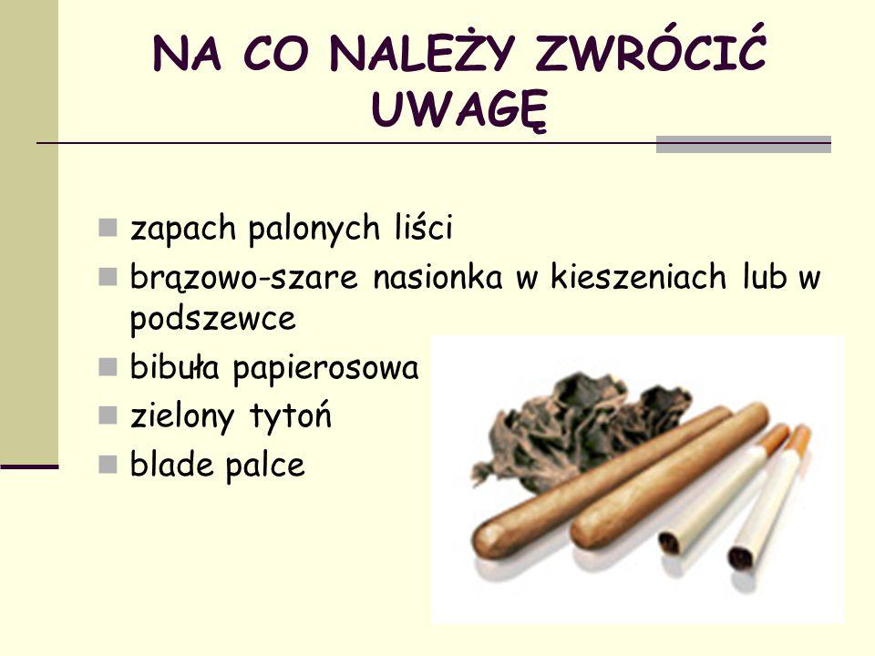 NA CO NALEŻY ZWRÓCIĆ UWAGĘ zapach palonych liści brązowo-szare nasionka w kieszeniach lub w podszewce bibuła papierosowa zielony tytoń blade palce