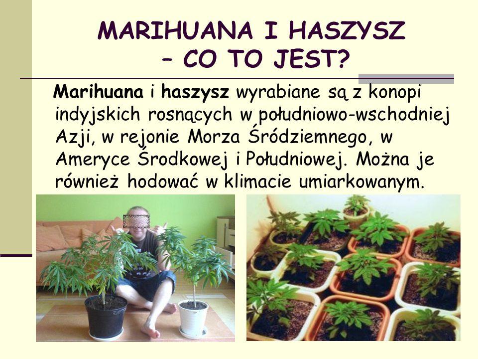 MARIHUANA I HASZYSZ – CO TO JEST? Marihuana i haszysz wyrabiane są z konopi indyjskich rosnących w południowo-wschodniej Azji, w rejonie Morza Śródzie