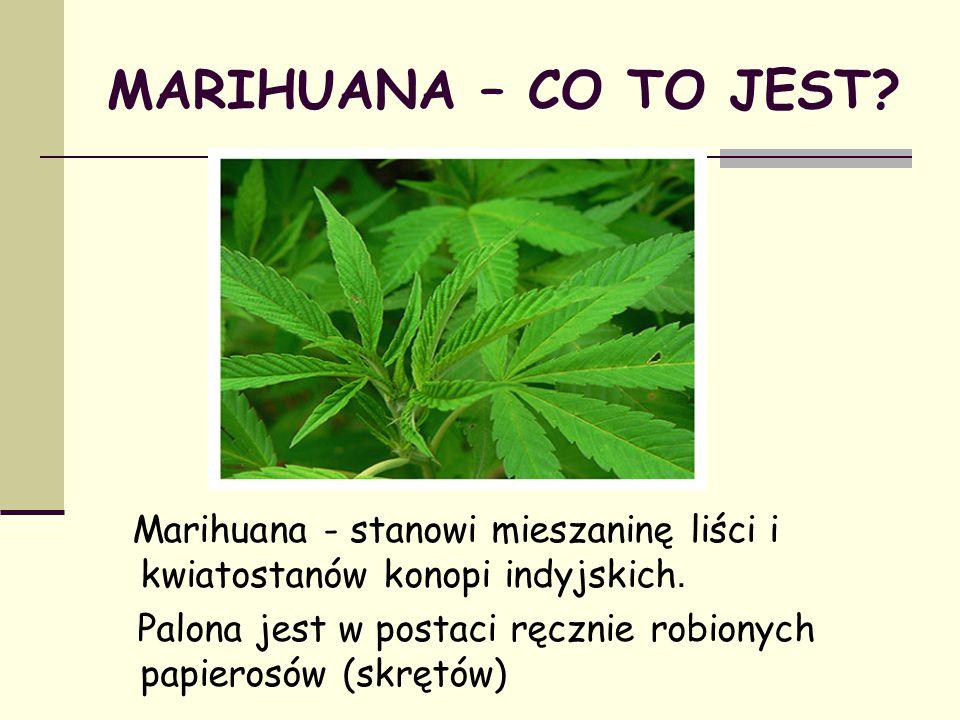 MARIHUANA – CO TO JEST? Marihuana - stanowi mieszaninę liści i kwiatostanów konopi indyjskich. Palona jest w postaci ręcznie robionych papierosów (skr