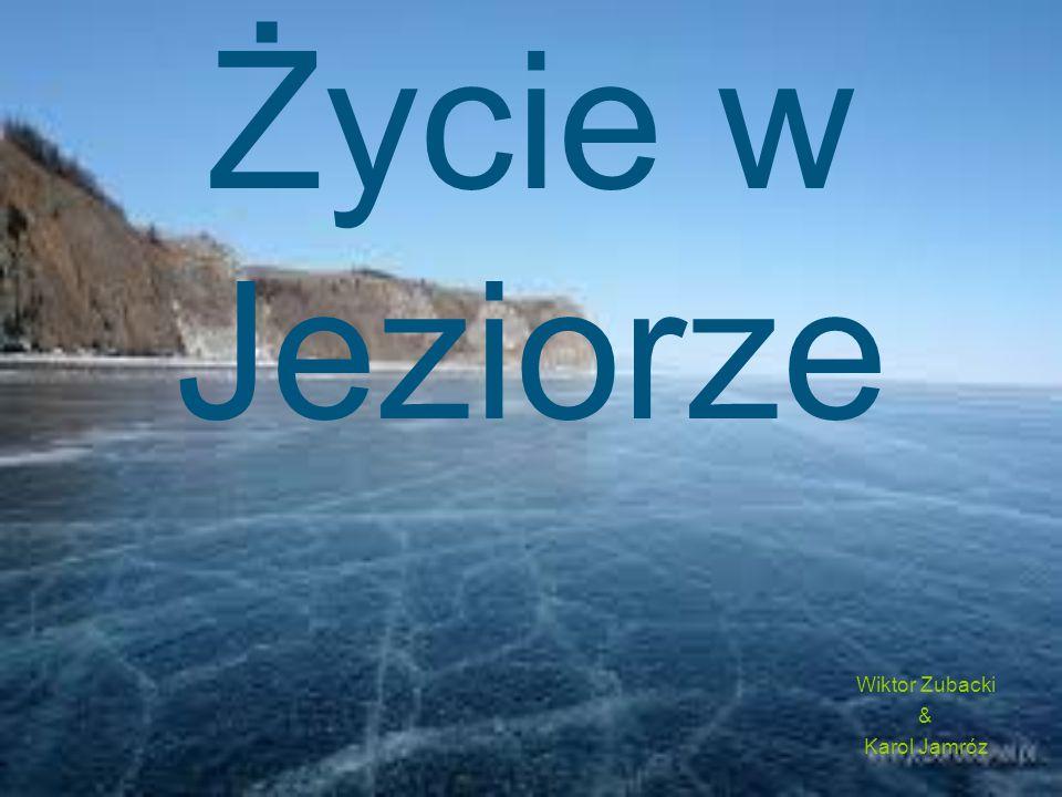 Życie w Jeziorze Wiktor Zubacki & Karol Jamróz