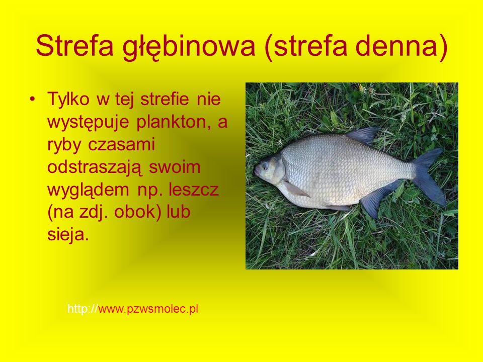 Strefa głębinowa (strefa denna) Tylko w tej strefie nie występuje plankton, a ryby czasami odstraszają swoim wyglądem np. leszcz (na zdj. obok) lub si