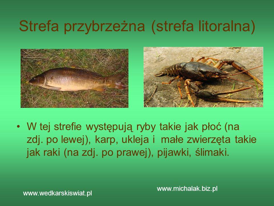 Strefa przybrzeżna (strefa litoralna) W tej strefie występują ryby takie jak płoć (na zdj. po lewej), karp, ukleja i małe zwierzęta takie jak raki (na