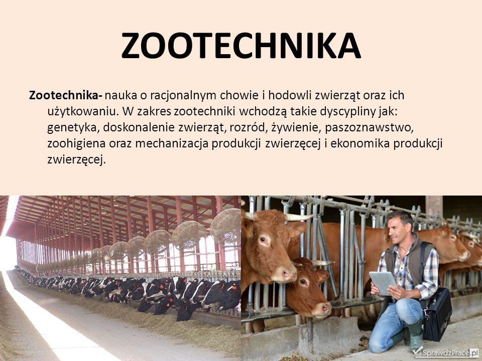 ZOOTECHNIKA Zootechnika- nauka o racjonalnym chowie i hodowli zwierząt oraz ich użytkowaniu. W zakres zootechniki wchodzą takie dyscypliny jak: genety
