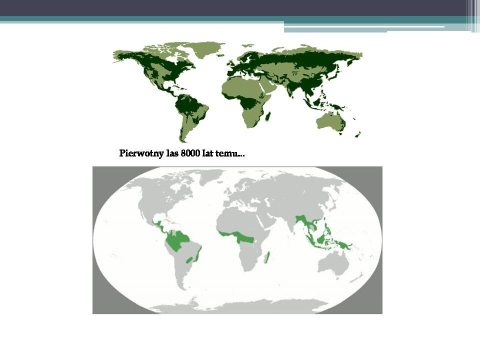 Malejąca bioróżnorodność na Ziemi i jej miary Edyta Wiszniewska, Zagrożenia ekologiczne, www.eko-samorzadowiec (ten i następny slajd)www.eko-samorzadowiec Ślad ekologiczny/stopy (Ecological Footprint) drugi wskaźnik uwzględniony w Living Planet Report -obliczany jako wielkość naszej konsumpcji w przeliczeniu na powierzchnię obszarów biologicznie produktywnych, inaczej: ile trzeba ha lądu i morza do zrekompensowania zasobów skonsumowanych i poświęconych na absorpcję odpadów -wyrażany jest w globalnych hektarach (gha) na osobę  Obecnie potrzebujemy półtorej kuli ziemskiej na odtworzenie tego, co rocznie zużywamy (inaczej - aby odtworzyć to, co z zasobów ziemskich zużywamy w rok, Ziemia potrzebuje 1,5 roku); w 2030 mogą to być dwie, a w 2050 - trzy kule ziemskie (trzy lata…), jeśli nic się nie zmieni…