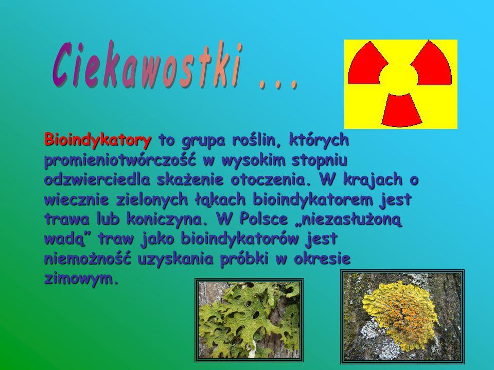 Bioindykatory to grupa roślin, których promieniotwórczość w wysokim stopniu odzwierciedla skażenie otoczenia. W krajach o wiecznie zielonych łąkach bi