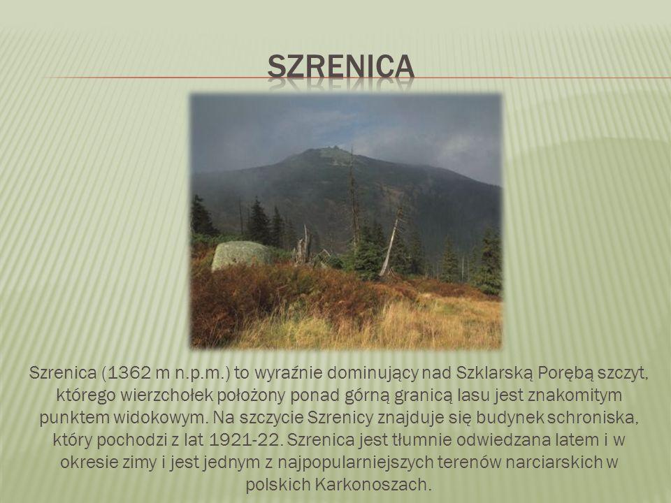Szrenica (1362 m n.p.m.) to wyraźnie dominujący nad Szklarską Porębą szczyt, którego wierzchołek położony ponad górną granicą lasu jest znakomitym pun