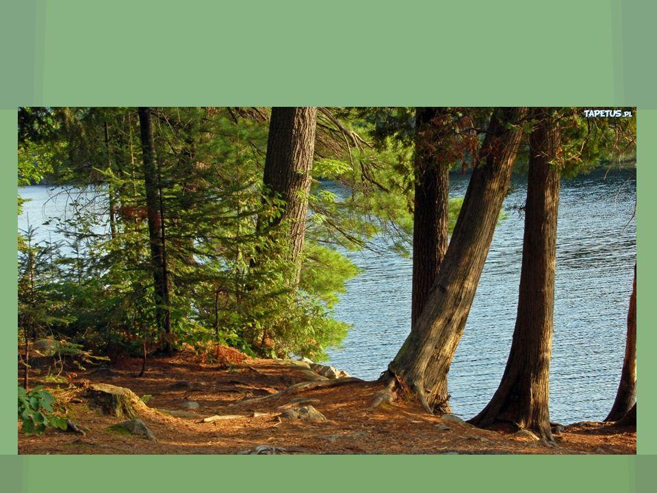 Zostaw las takim, jakim go zastałeś.