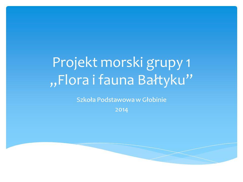 """Projekt morski grupy 1 """"Flora i fauna Bałtyku"""" Szkoła Podstawowa w Głobinie 2014"""