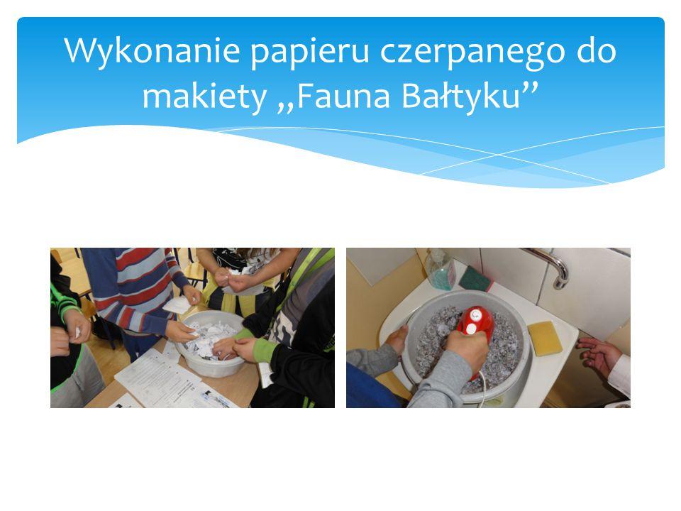 """Wykonanie papieru czerpanego do makiety """"Fauna Bałtyku"""""""