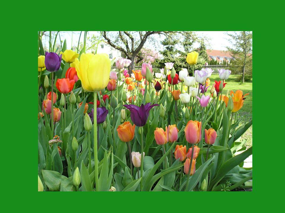"""""""Louvre """"Spring Green """"Foxtrott"""