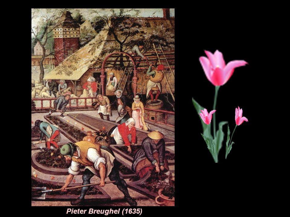 """Siam tulipany z Tajlandii ""Estella-Rynveld ""Golden-Artist"