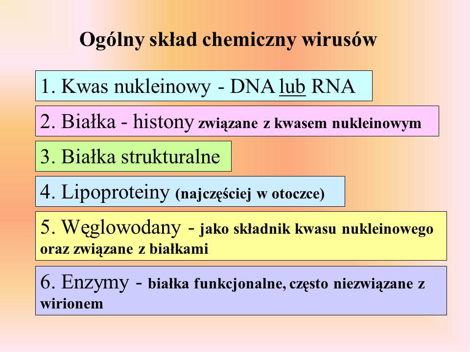 Ogólny skład chemiczny wirusów 1. Kwas nukleinowy - DNA lub RNA 2. Białka - histony związane z kwasem nukleinowym 3. Białka strukturalne 4. Lipoprotei