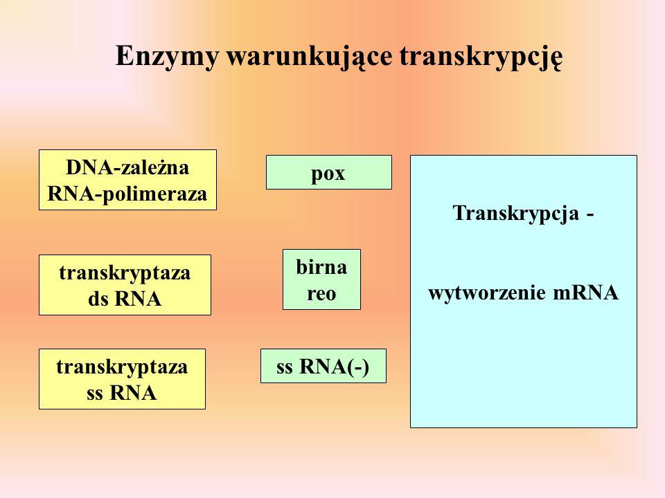 Enzymy warunkujące transkrypcję DNA-zależna RNA-polimeraza transkryptaza ds RNA transkryptaza ss RNA pox birna reo ss RNA(-) Transkrypcja - wytworzeni