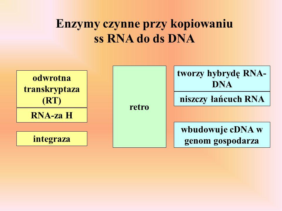 Enzymy czynne przy kopiowaniu ss RNA do ds DNA odwrotna transkryptaza (RT) RNA-za H integraza retro tworzy hybrydę RNA- DNA niszczy łańcuch RNA wbudow