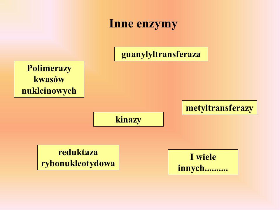 Inne enzymy kinazy guanylyltransferaza metyltransferazy Polimerazy kwasów nukleinowych reduktaza rybonukleotydowa I wiele innych..........