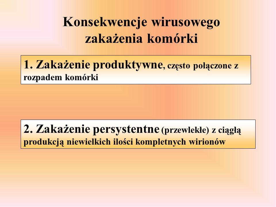 Konsekwencje wirusowego zakażenia komórki 1. Zakażenie produktywne, często połączone z rozpadem komórki 2. Zakażenie persystentne (przewlekłe) z ciągł