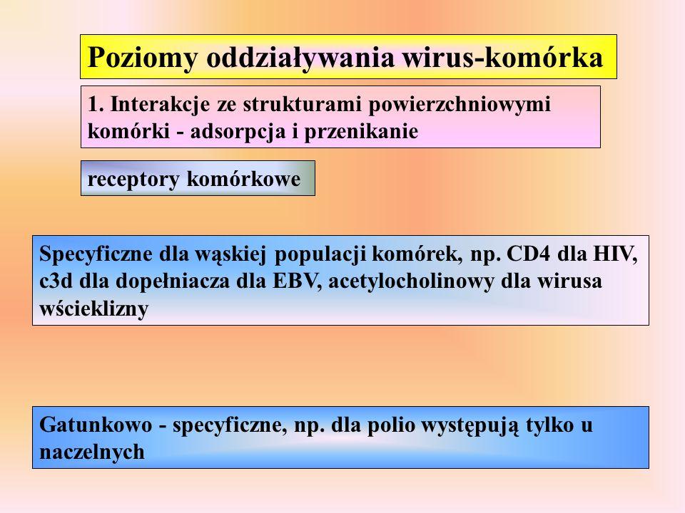 Poziomy oddziaływania wirus-komórka 1. Interakcje ze strukturami powierzchniowymi komórki - adsorpcja i przenikanie receptory komórkowe Specyficzne dl