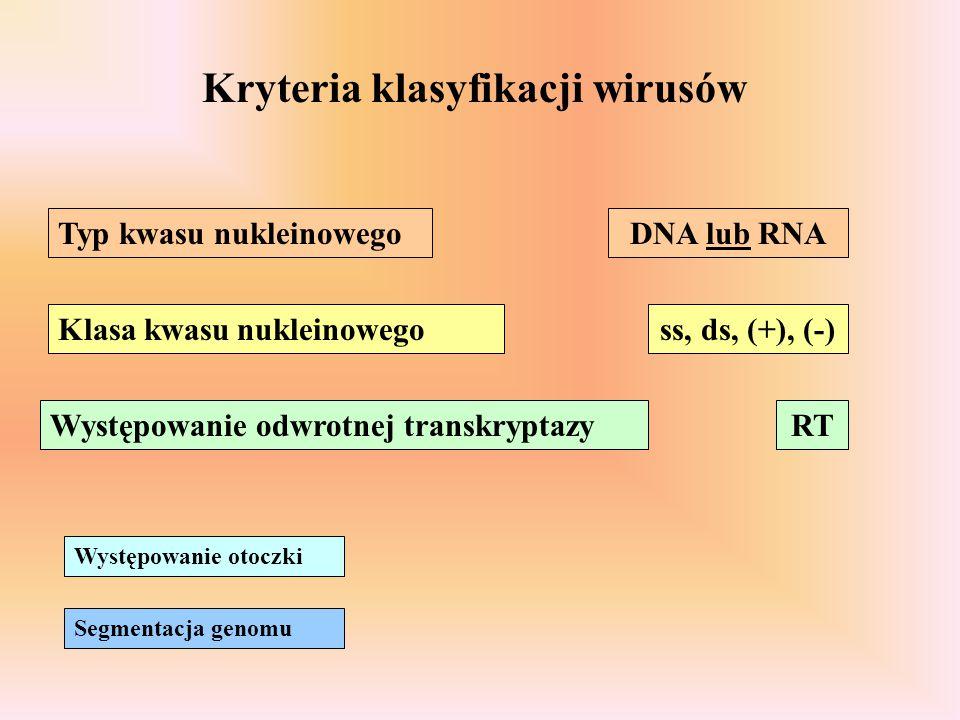 Kryteria klasyfikacji wirusów Typ kwasu nukleinowego Klasa kwasu nukleinowego Występowanie odwrotnej transkryptazy Występowanie otoczki Segmentacja ge