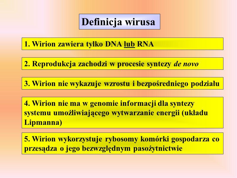 Definicja wirusa 1. Wirion zawiera tylko DNA lub RNA 2. Reprodukcja zachodzi w procesie syntezy de novo 3. Wirion nie wykazuje wzrostu i bezpośrednieg