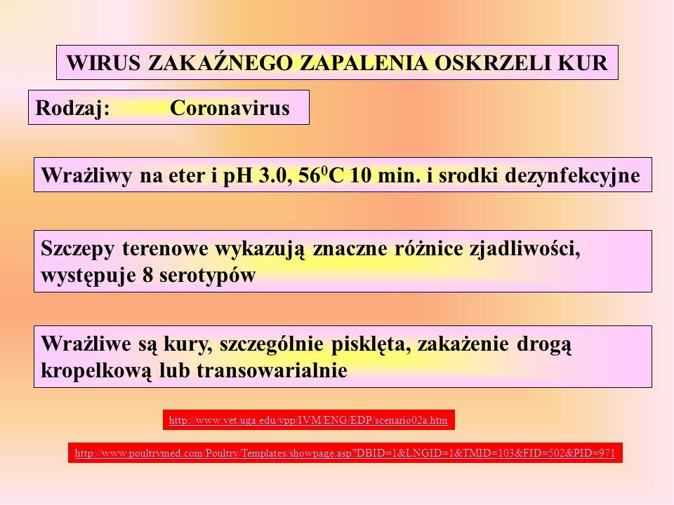 WIRUS ZAKAŹNEGO ZAPALENIA OSKRZELI KUR Rodzaj:Coronavirus Wrażliwy na eter i pH 3.0, 56 0 C 10 min. i srodki dezynfekcyjne Szczepy terenowe wykazują z