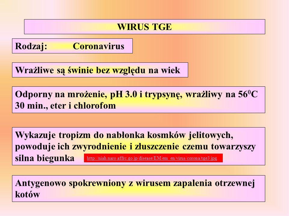 Wykazuje tropizm do nabłonka kosmków jelitowych, powoduje ich zwyrodnienie i złuszczenie czemu towarzyszy silna biegunka WIRUS TGE Rodzaj:Coronavirus