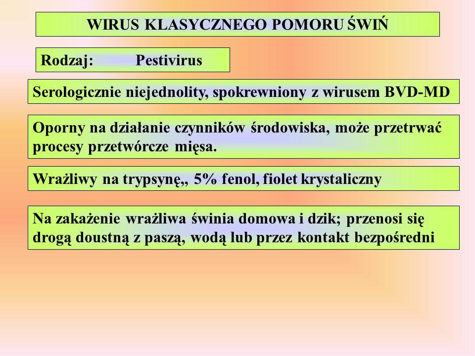 Rodzaj:Pestivirus Serologicznie niejednolity, spokrewniony z wirusem BVD-MD Oporny na działanie czynników środowiska, może przetrwać procesy przetwórc