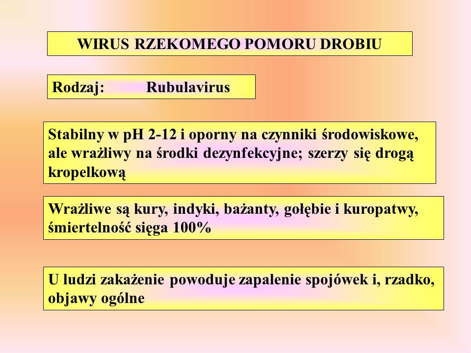 WIRUS RZEKOMEGO POMORU DROBIU Rodzaj:Rubulavirus Stabilny w pH 2-12 i oporny na czynniki środowiskowe, ale wrażliwy na środki dezynfekcyjne; szerzy si